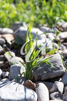 stones in the grass