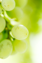 Grapes on the nature