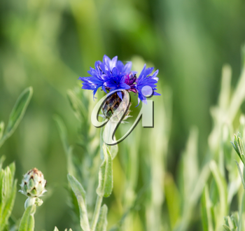 blue flower in nature
