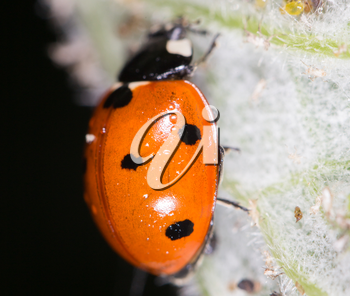 ladybird on nature. close