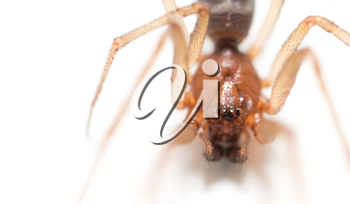 portrait of a spider on a white background
