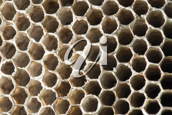 honeycomb wasp as a background. texture