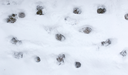 Dog footprints in the snow
