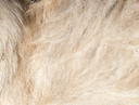 dog fur as background. texture