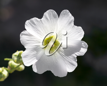 white flower in nature