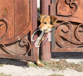 dog peeking out of the gate