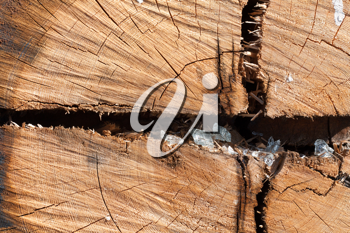 Royalty Free Photo of a Wooden Stump
