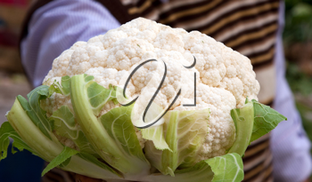 Royalty Free Photo of a Person Holding Cauliflower
