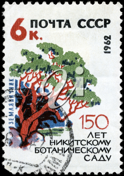 USSR - CIRCA 1962: A Stamp printed in USSR shows the Arbutus, from the series Nikitsky Botanical Gardens, 150th anniv., circa 1962
