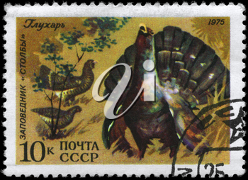 USSR - CIRCA 1975: A Stamp printed in USSR shows image of a Wood Grouse with the inscription Stolby Wildlife Reservation, series, circa 1975