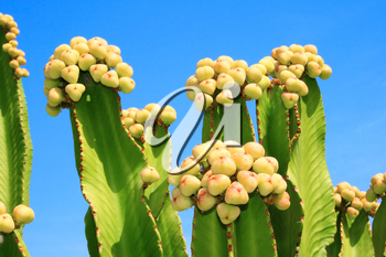 Royalty Free Photo of a Cactus Tree