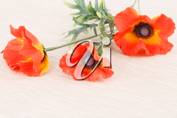 Red fabric poppies on canvas background.