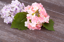 Pink fabric flowers on wooden background, closeup picture.