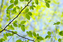 Royalty Free Photo of a Leaf Background