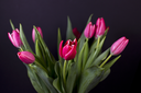 Closeup of red tulips on dark background