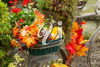 Closeup horizontal photo of old stationary bike basket filled with leaves, pumpkins, and other various autumn objects with green bushes and red flowers in background