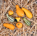 Overhead view of real seasonal autumn gourds on straw and rustic wood.
