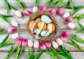 tulips circle border with colorful real eggs inside nest on rustic white wooden boards for Easter Background