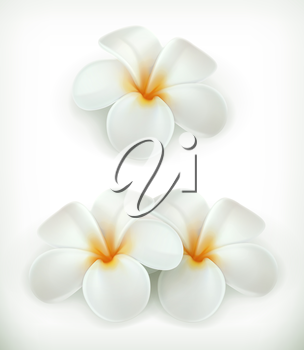 White flowers, vector icons