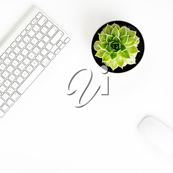 White office desk table with wireless aluminum keyboard, mouse and succulent flower in pot. Top view with copy space. Flat lay.