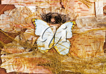 Abstract composition of butterflies, birch bark and straw