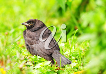 Royalty Free Photo of a Bird on Grass