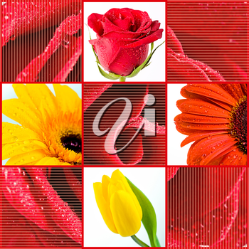 Collage with different spring flowers on floral background