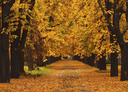 Photo of an autumn alley in the countryside.
