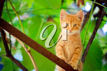 Young Kitten Sitting On Branch Outdoor Shot At Sunny Day