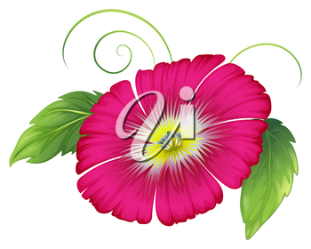 Illustration of a big carnation pink flower on a white background