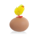 Easter chicks surrounding a large egg, isolated