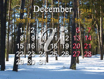 beautiful calendar for the December of 2014 on the background of winter forest