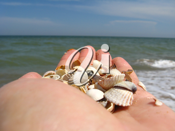 a palm full of shells on the background of the sea
