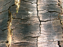 Background from a bark of a tree