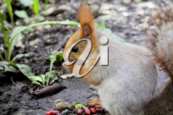 Image of eating squirrel on tree in park