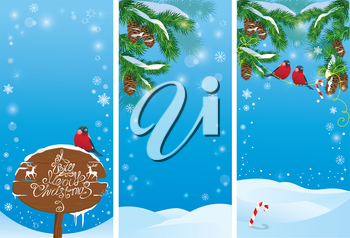 Set of vertical banners with fir tree branches and bullfinch birds on light blue sky background. Images for Christmas and New Year design.