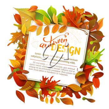 Colourful autumn birch, elm, oak, rowan, maple, chestnut, aspen leaves and acorns on white background. White square sheet of paper on them. You can place your text in the center.