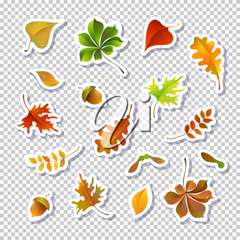 Autumn leaves vector illustrations set. Foliage stickers isolated on transparent background. Cartoon green, red and yellow leafage drawings pack. Botanical composition. Frondage collection