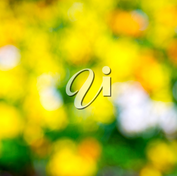 in london yellow flower field nature and spring