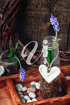 Blooming hyacinth and spring seedlings in a wooden box rustic