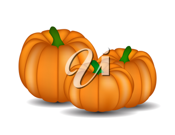 Fresh Orange Pumpkin Isolated on White Background Vector Illustration