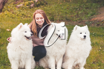 Caucasian girl with three white Samoyed dogs on a walk in autumn park