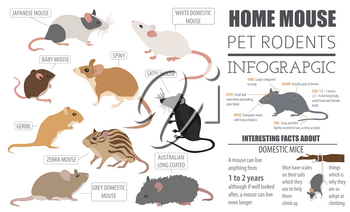 Mice breeds icon set flat style isolated on white. Mouse rodents collection. Create own infographic about pets. Vector illustration