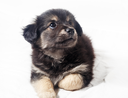 Adorable cute little puppy dog on light background.