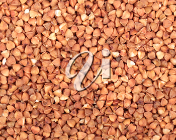 Grains of the buckwheat for background