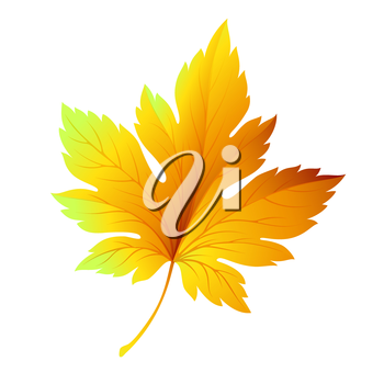 Fall leaf isolated in white. Vector illustration EPS 10
