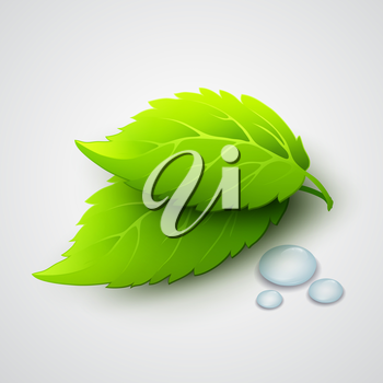 Vector illustration of green leaves and dew drops EPS10