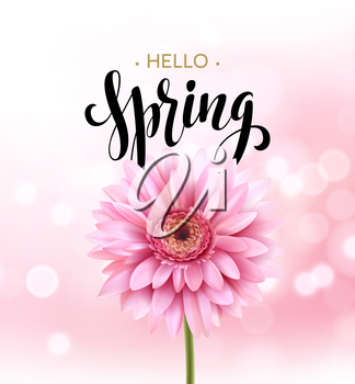 Gerbera Flower Background and Hello Spring Lettering. Vector Illustration EPS10