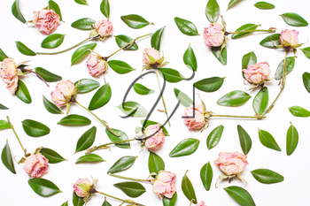 The decor of green leaves and pink flowers, roses on a white background.