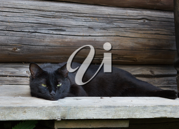 Beautiful black cat with green eyes lying on a wooden bench.